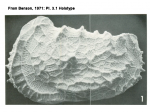 Holotype of Abyssocythere atlantica from Benson, 1971 Pl. 3.1, author: Brandão, Simone Nunes