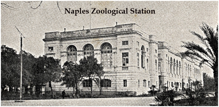 The Naples Lab in 1908