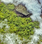 Terrestrial plants
