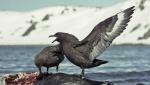 Terrestrial & amphibious living animals