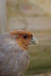 VOC Oostende: de dieren