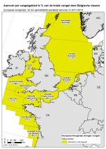 Europese kongeraal - Conger conger (2015)