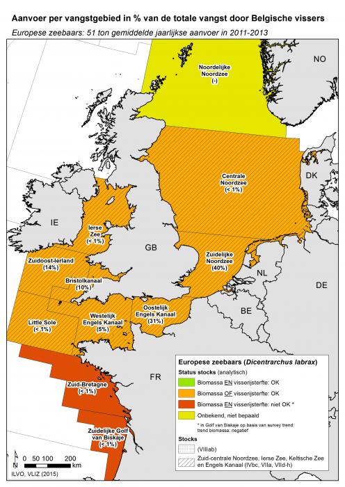 Europese zeebaars - Dicentrarchus labrax (2015)