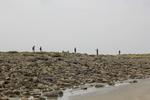 Strandonderzoek nabij Station Marine de Wimereux, Frankrijk (2016.05.11)