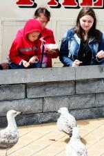 Feeding the sea-gulls