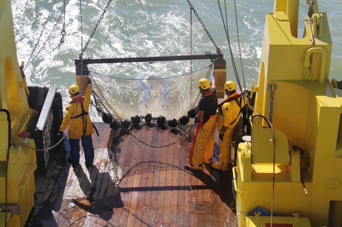 Beam trawl | Flanders Marine Institute