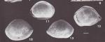 Bairdoppilata obovata Coimbra & Carreño 2002 - Paratype and Holotype (from original description), author: Coimbra & Carreño, 2002