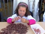 Shrimp peeling - Décorticage de crevettes - Garnalen pellen