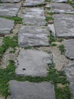 Stones of groyne
