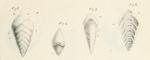 Textularia aciculata d'Orbigny, 1826, author: Le Coze, Fran�ois