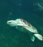 Bezoek aan aquarium Nausicaa in Boulogne-sur-Mer, Frankrijk (2017.05.02)