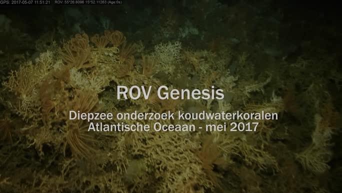 ROV Genesis - duik boven koudwaterkoraalriffen