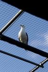 Vogelkooi @ VOC Oostende
