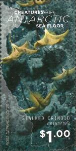 Crinoidea sp.