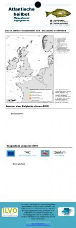 Atlantic halibut - Hippoglossus hippoglossus (2019)