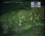 First ROV-pictures (1)