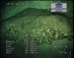 First ROV-pictures (2)