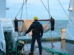 beam trawl