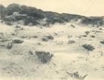 Massart (1908, foto 007)
