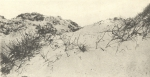 Massart (1908, foto 032)