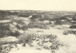 Massart (1908, foto 034)