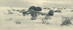 Massart (1908, foto 039)