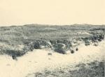 Massart (1908, foto 045)