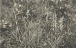 Massart (1908, foto 051)