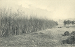 Massart (1908, foto 064)