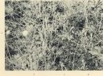 Massart (1908, foto 076)