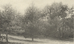 Massart (1908, foto 091)