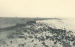 Massart (1908, foto 096)