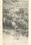 Massart (1908, foto 102 A.)
