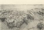 Massart (1908, foto 104)