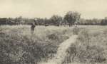 Massart (1908, foto 140)