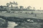 Massart (1908, foto 156)