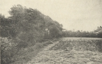 Massart (1908, foto 164)