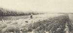 Massart (1908, foto 165)