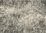 Massart (1908, foto 167)