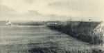 Massart (1908, foto 171)