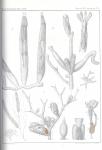 Van Beneden, P.-J. (1845). Recherches sur l'anatomie, la physiologie et le développement des Bryozoaires qui habitent la côte d'Ostende Nouveaux Mémoires de l'Académie Royale des Sciences et des Belles-Lettres de Bruxelles. In 4° XVIII: 1-44