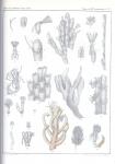 &lt;B&gt;Van Beneden, P.-J.&lt;/B&gt; (1845). Recherches sur l'anatomie, la physiologie et le développement des Bryozoaires qui habitent la côte d'Ostende <i>Nouveaux Mémoires de l'Académie Royale des Sciences et des Belles-Lettres de Bruxelles. In 4° XVIII</i>: 1-44
