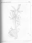 Van Beneden, P.-J. (1867). Recherches sur la faune littorale de Belgique (Polypes) Mém. Acad. R. Sci. Lett. B.-Arts Belg., Collect. 4 XXXVI: 1-207, plates I-XIX