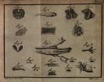 Sellius, G. (1733). Historia naturalis teredinis seu Xylophagi marini, tubulo-conchoidis speciatim belgici: cum tabulis ad vivum coloratis. Apud Hermannum Besseling: Trajecti ad Rhenum (Utrecht), Netherlands. (30), 353, (11), 4 pl. pp.