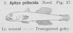 Gilson (1921, fig. 47)