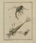 Slabber, M. (1778). Natuurkundige verlustigingen, behelzende microscopise waarneemingen van in- en uitlandse water- en land-dieren. J. Bosch: Haarlem. 166, 18 plates pp.
