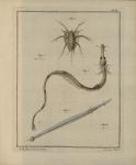 Slabber (1778, pl. 06)