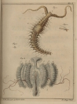 Slabber (1778, pl. 07)