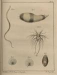 <B>Slabber, M.</B> (1778). Natuurkundige verlustigingen, behelzende microscopise waarneemingen van in- en uitlandse water- en land-dieren. J. Bosch: Haarlem. 166, 18 plates pp.