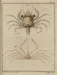 Slabber (1778, pl. 18)
